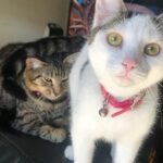 Conclusion For The Best Cat Rescues in Orange County CA
