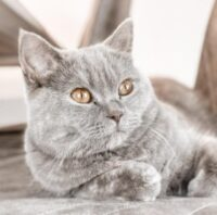 Dealing With Allergies From Cats
