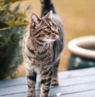 The Psyche Behind Cats and Killing