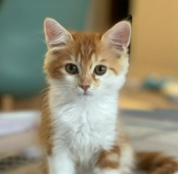 Conclusion For The Best Cat Breeders in Dubai