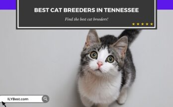 Cat Breeders in Tennessee