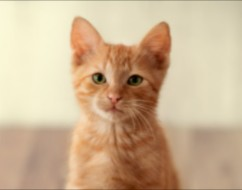 Conclusion For The Best Cat Breeders in Los Angeles